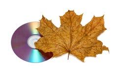 cd клен листьев Стоковая Фотография