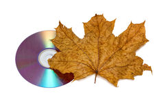 Cd & maple leaf. Conceptual image of CD and faded maple leaf. Isolated on white background Stock Photography