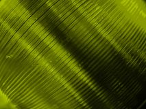 Cd teintés par vert Image stock