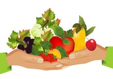 cdr karmowych owoc zdrowy wektor ilustracja wektor