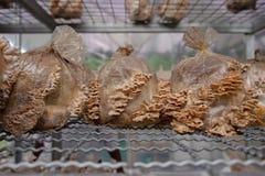 Ceño fruncido de las setas en la granja Imagen de archivo libre de regalías