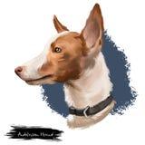 $ce-andalusisch digitale die de kunstillustratie van de Hondenhond op witte achtergrond wordt geïsoleerd Honden gelijkend op Iber Royalty-vrije Stock Foto's