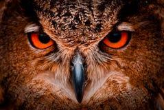 Vieux yeux sages de hibou Photo libre de droits