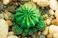 Ce les photos est cactus photographie stock libre de droits