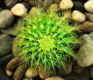 Ce les photos est cactus photographie stock