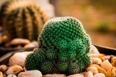 Ce les photos est cactus image stock