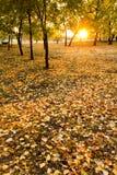 Ce lever de soleil d'automne illumine les feuilles jaunes lumineuses de chute Photographie stock libre de droits