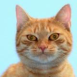 Ce n'est pas Garfield Image stock