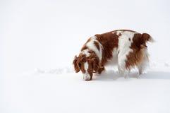 Ce qui est sous la neige Image stock