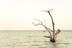 Ocean landscape with lonely dead tree Royalty Free Stock Image