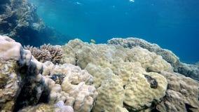 Cean, Marine, Warm tropical sea. stock video