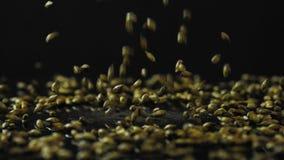Cebada para hacer caídas oscuras de la cerveza del arte en fps superficiales de cristal negros de una cámara lenta 180 almacen de video