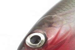 Cebo de pesca Foto de archivo libre de regalías