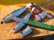 Cebo de pesca fotografía de archivo libre de regalías