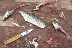 Cebo de pesca fotos de archivo libres de regalías