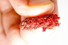 Cebo o comida de pesca para la polilla de la larva de los pescados del acuario fotografía de archivo