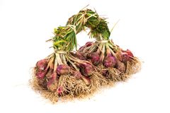 Cebola após a colheita Fotos de Stock Royalty Free