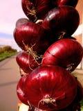 Cebola brilhante vermelha no pavilhão de comércio foto de stock
