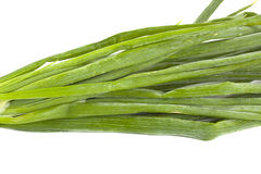 Cebola verde Imagens de Stock