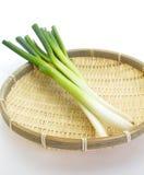 Cebola verde no fundo branco fotografia de stock royalty free