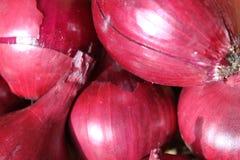 Cebola vermelha Imagem de Stock