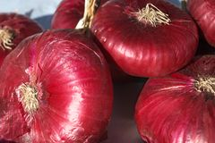 Cebola vermelha fresca Fotografia de Stock Royalty Free