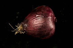 Cebola vermelha fresca Imagem de Stock
