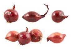 Cebola vermelha isolada Imagem de Stock