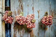 Cebola vermelha que pendura na parede da casa: Close up imagens de stock royalty free