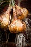 Cebolas Fotografia de Stock Royalty Free