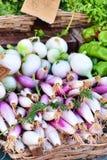 cebolas Imagem de Stock