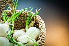 Cebolas brancas Imagem de Stock