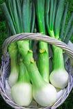 Cebolas brancas frescas fotografia de stock
