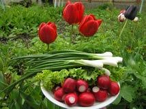 Cebolas da mola e radish vermelho Foto de Stock