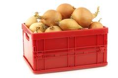 Cebolas de Brown em uma caixa plástica vermelha Imagem de Stock