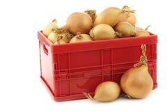 Cebolas de Brown em uma caixa plástica vermelha Fotografia de Stock