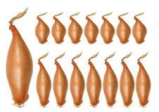 Cebolas do Shallot fotografia de stock royalty free