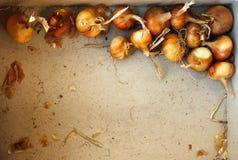 Cebolas em um quadro Fotos de Stock