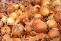Cebolas espanholas em um suporte do mercado Foto de Stock Royalty Free