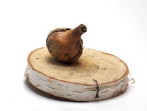 Cebolas frescas em um suporte de madeira no fundo branco/cebolas frescas Fotos de Stock