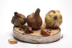 Cebolas frescas em um suporte de madeira no fundo branco/cebolas frescas Imagens de Stock Royalty Free