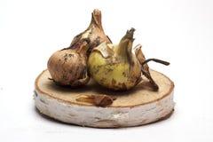 Cebolas frescas em um suporte de madeira no fundo branco/cebolas frescas Fotografia de Stock