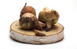 Cebolas frescas em um suporte de madeira no fundo branco/cebolas frescas Fotografia de Stock Royalty Free