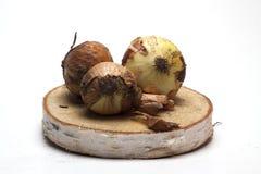 Cebolas frescas em um suporte de madeira no fundo branco/cebolas frescas Foto de Stock Royalty Free