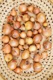 Cebolas frescas Fundo das cebolas Cebolas maduras Cebolas na cesta Foto de Stock Royalty Free
