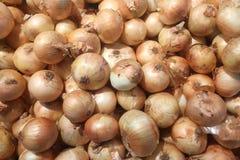 Cebolas frescas Cebolas para o fundo Foto de Stock Royalty Free