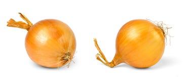 Cebolas isoladas no branco Imagem de Stock Royalty Free