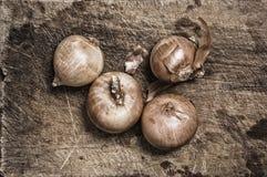 Cebolas na tabela de madeira velha. Foto de Stock Royalty Free