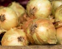 Cebolas no mercado do fazendeiro Imagens de Stock Royalty Free