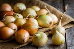 Cebolas orgânicas frescas Foto de Stock